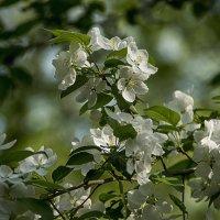 Пора цветения :: Яков Реймер