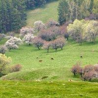 Весна в дождливый день :: Сергей Рычков
