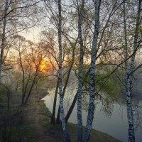 В ветвях... :: Roman Lunin