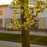 Взелёном золоте заката :: Дмитрий Костоусов