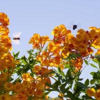 Цветы и насекомые :: Александр Деревяшкин
