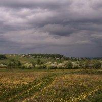 Цветут сады :: Владимир Макаров