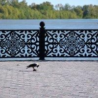 Ворон ужинает птичкой. :: Anna Gornostayeva