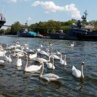 Балтийск.База ВМФ России. :: Владимир Старовойтов