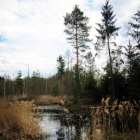 По дороге в лес. :: Виктория Чурилова