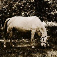Жила была лошадь... :: Светко Ова