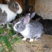 кролиха с крольчатами :: игорь