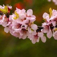 Весна шагает :: юрий Амосов