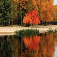 Золота осень на Днепре :: Виктор Марченко