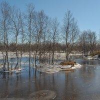 Весна!!! :: Олег Кулябин