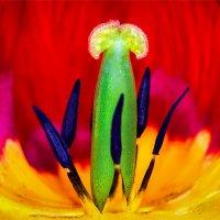 Внутри цветка :: Владимир Шамота