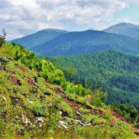 Вершина встречает цветами :: Сергей Чиняев