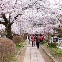 На улицах цветущего города. Киото :: Swetlana V