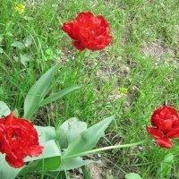 Три красных брата :: Дмитрий Никитин