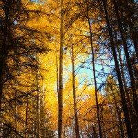 Осень :: Ирина Кузина