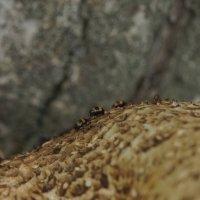 Лучше гор могут быть только... грибные холмы :: Balakhnina Irina