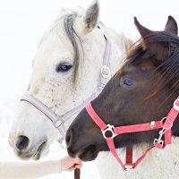Horses :: Ольга Ярахтина