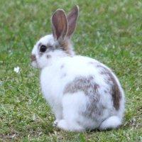 Дикие кролики в Сиднее :: Антонина