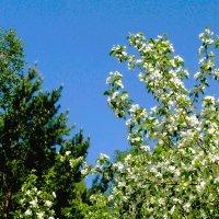 Пора цветения :: Александр Садовский