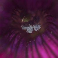 Flower_64 :: Trage