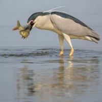 Удачная рыбалка! :: Марк Бабич
