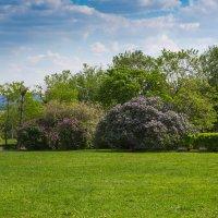 коломенскоев период цветения яблонь. :: юрий макаров