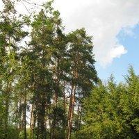 В ботаническом саду. :: Лена Минакова