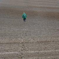 Тропка в поле :: Валерий Талашов