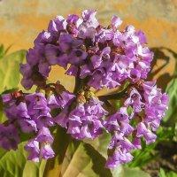 Таёжный цветок. :: юрий Амосов