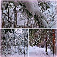 зимняя сказка :: Валерия Воронова