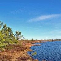 Северные болота :: Владимир Кочнев