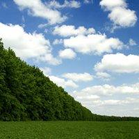 Полоса лесА :: Ivan Shyshkin