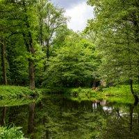Пруд парка Jakobsruhe :: Игорь Вишняков