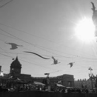 Майские птицы на Невском :: sv.kaschuk