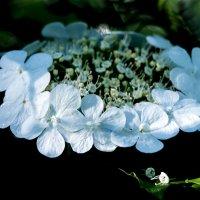 Ой ,цветёт калина... :: Тамара
