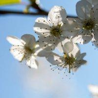 Весна :: Дмитрий Иванов