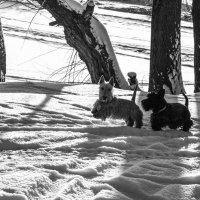 Winter memories :: Света Гончарова