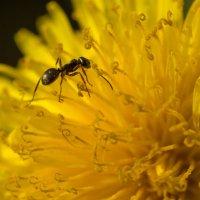 В поисках нектара. :: Igor Shoshin