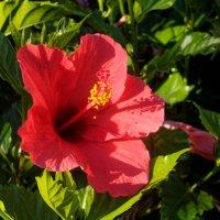 Немного цветов на Тенерифе :: Witalij Loewin