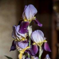 Цветы для наших любимых :: Александр Грищенко