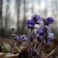 Первые цветы :: Владислав Ходий