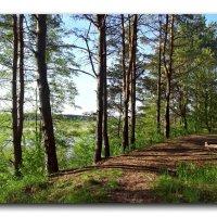 Лес на берегу реки. :: Чария Зоя