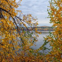 Осеннее золото :: vladimir Bormotov
