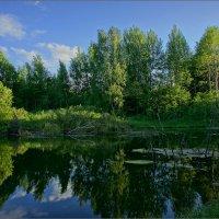 На старом пруду :: Igor Andreev