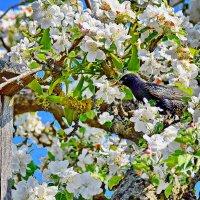 Птенцы  есть  хотят. :: Валера39 Василевский.
