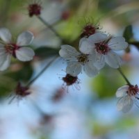 лютики-цветочки у меня в садочке :: Екатерина Липинская