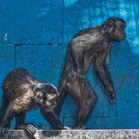 Первая стадия превращения обезьяны в человека... :: Игорь Кузьмин