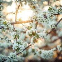 Весна :: Кирилл Кузнецов
