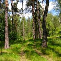 В лесной тиши :: Милешкин Владимир Алексеевич