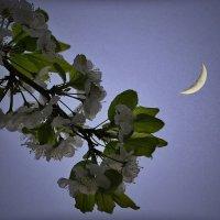 майская ночь :: Сергей Розанов